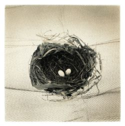 Shelters and Nests